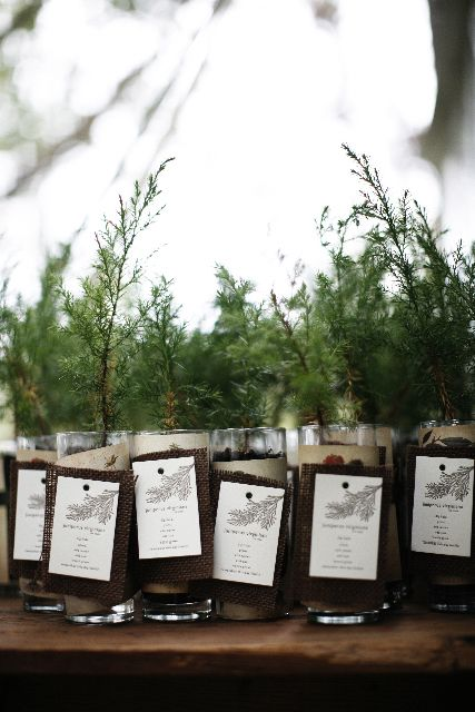 Sapling Wedding Favor